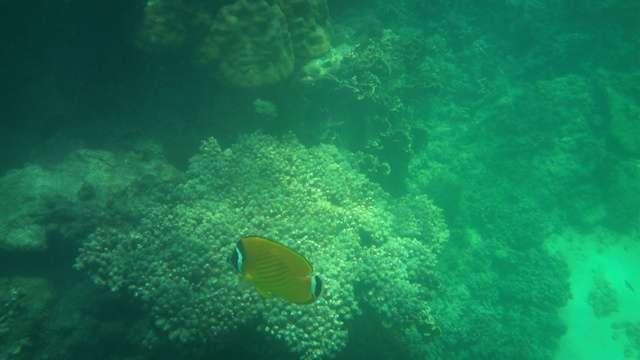 ein gelber Fisch