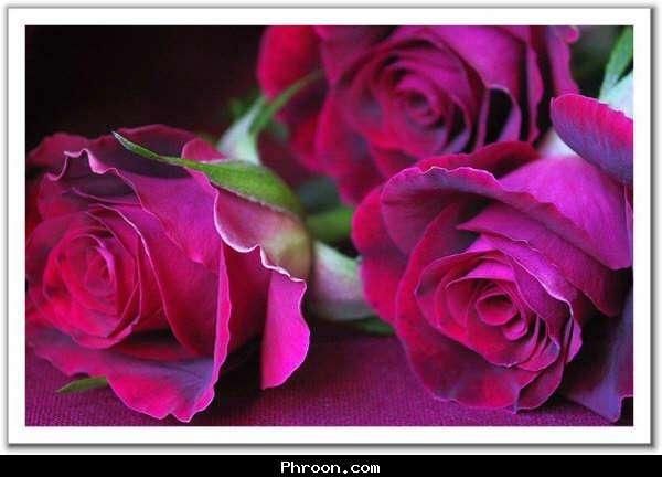 ورود جميلة 411010551171479781.j